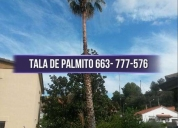 Ofrecemos 663-777-576 poda y tala de pinos