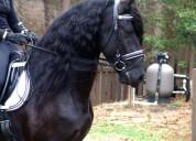 Se vende caballos pura raza espanol