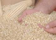 Se vende maÍz en grano