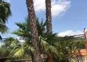 Jardineria natura palma.  contactarse.