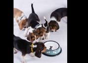 Hay cachorritos de diferentes colores: bicolor, tr