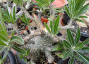 Plantas de interior avalabel a buen precio