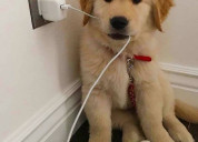 Mascotas para hogares