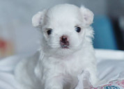 Adorable puppies for adoption