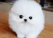 Regalo cachorros lulu pomeranian mini toy para su,